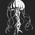 Gelatinous Zooplankton (aka Jellyfish!)